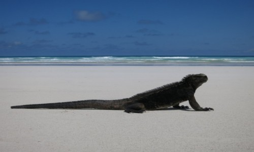 Zdjecie EKWADOR / Galapagos - Playa Blanca / Playa Blanca w Santa Cruz / Santa Cruz - Pl