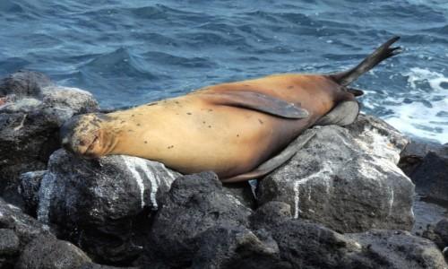 Zdjecie EKWADOR / Galapagos / Galapagos / Relaks