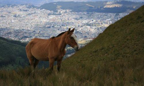 Zdjęcie EKWADOR / brak / Kito / Koń z Kito he he