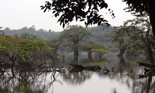 Zdjęcie EKWADOR / brak / dżungla / cuyabano lodge