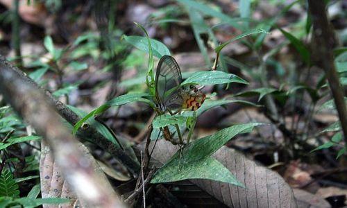 Zdjecie EKWADOR / brak / dżungla / motyl