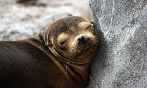 Zdjecie EKWADOR / brak / Galapagos / lwica morska
