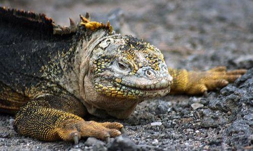 Zdjecie EKWADOR / brak / Galapagos / przyjemniaczek