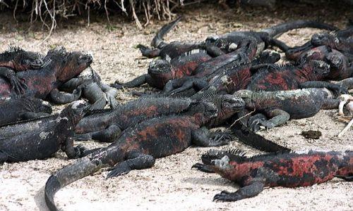Zdjecie EKWADOR / brak / Galapagos / diabelskie zebranie