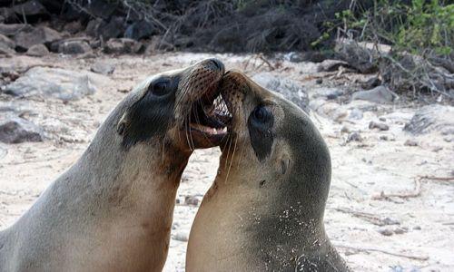 Zdjęcie EKWADOR / brak / Galapagos / lwice morskie