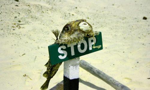 Zdjecie EKWADOR / brak / Galapagos / STOP!
