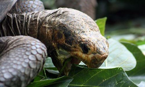 Zdjecie EKWADOR / brak / Galapagos / żółw