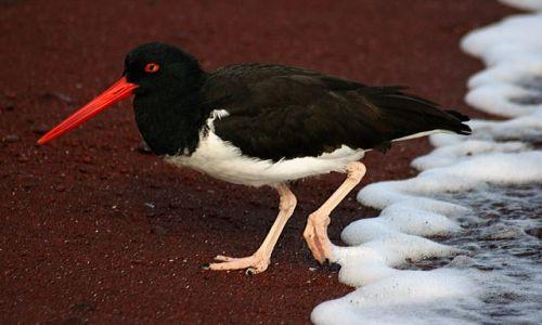 Zdjęcie EKWADOR / brak / Galapagos / ptak