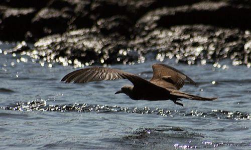 Zdjecie EKWADOR / brak / Galapagos / ptak