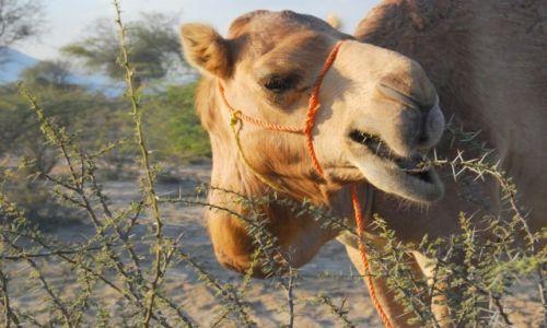 Zdjecie ZJEDNOCZONE EMIRATY ARABSKIE / - / Fujairah / Paszportowe