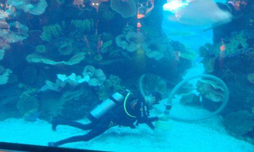 Zdjęcie ZJEDNOCZONE EMIRATY ARABSKIE / DUBAJ / Burdż Chalifa  / Jakie emocje towarzyszą człowiekowi który czyści lbrzymie akwarium z rekinami
