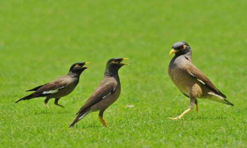 Zdjęcie ZJEDNOCZONE EMIRATY ARABSKIE / Dubaj / Dubaj / Ptaszki Dubaju