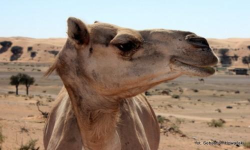 Zdjecie ZJEDNOCZONE EMIRATY ARABSKIE / Fujairah / Fujairah / oko w oko