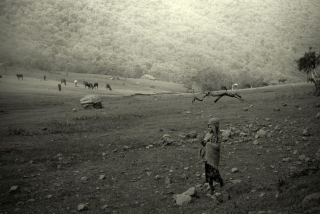 Zdjęcia: Góry Simen, północna Etiopia, pastuszek, ESTONIA