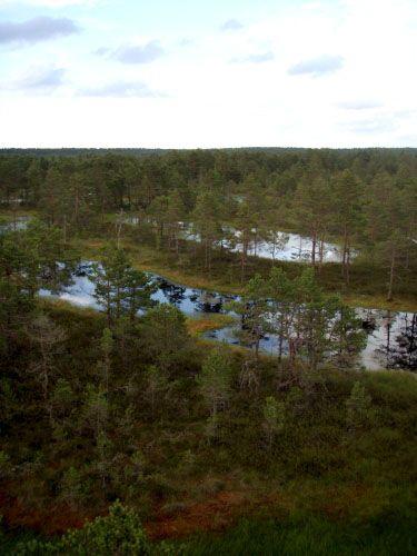 Zdjęcia: Lahemaa Rahvuspark, Lahemaa Rahvuspark, Bagna Lahemaa, ESTONIA