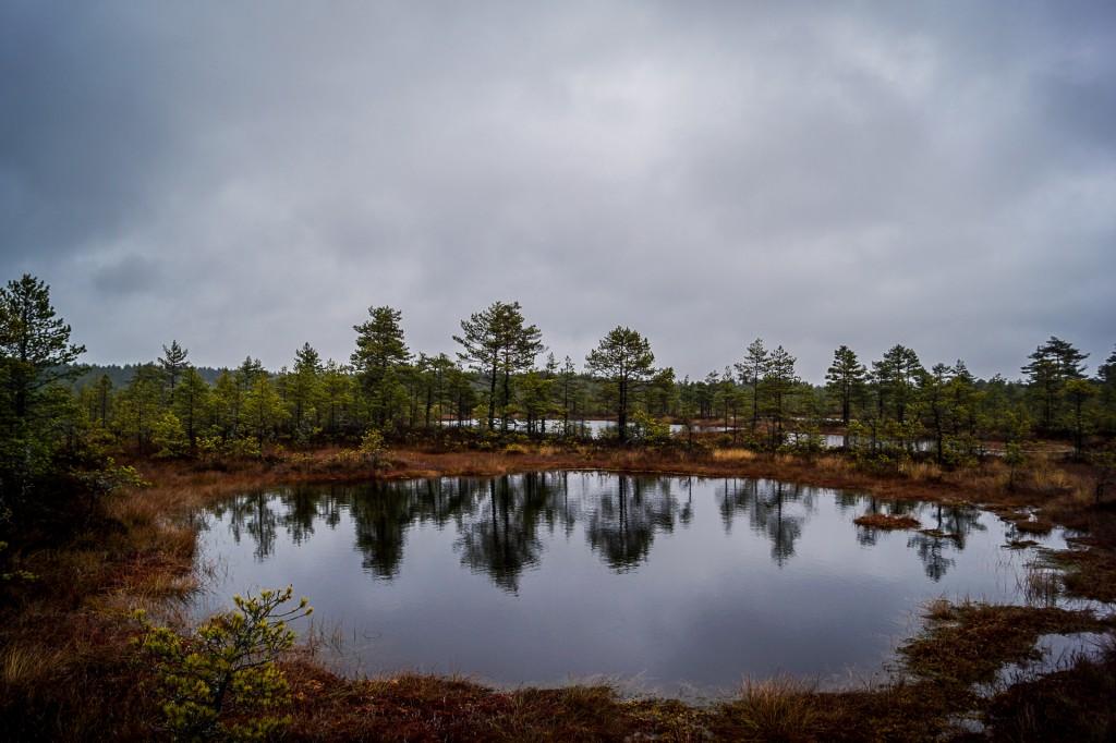 Zdjęcia: Park Narodowy Lahema, Park Narodowy Lahema, Park Narodowy Lahema, ESTONIA