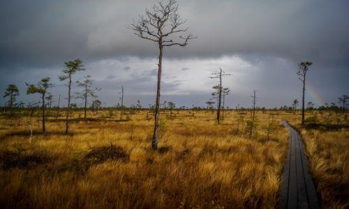 ESTONIA / Park Narodowy Soomaa / Park Narodowy Soomaa / Konkurs Natura w obiektywie