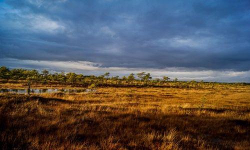 ESTONIA / Park Narodowy Soomaa / Park Narodowy Soomaa / Park Narodowy Soomaa