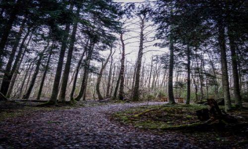 Zdjęcie ESTONIA / Park Narodowy Soomaa / Park Narodowy Soomaa / Park Narodowy Soomaa