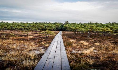 Zdjęcie ESTONIA / Park Narodowy Soomaa / Park Narodowy Soomaa / Park Narodowy Sooma