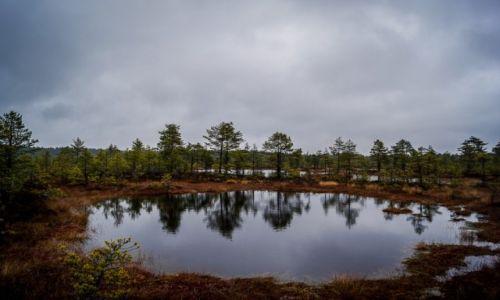 Zdjecie ESTONIA / Park Narodowy Lahema / Park Narodowy Lahema / Park Narodowy Lahema