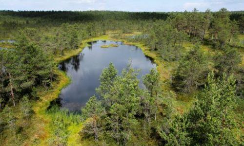Zdjecie ESTONIA / - / Park narodowy Lahemaa, Viru raba / Panorama z wie�