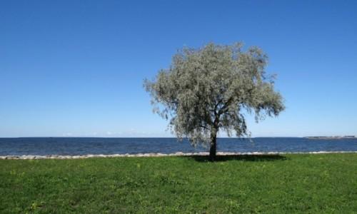 Zdjecie ESTONIA / Harjumaa / Tallinn / W stronę Pirity