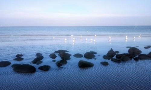 Zdjęcie ESTONIA / Harjumaa / Pirita / Nad Zatoką Fińską