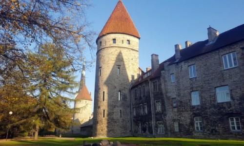 Zdjęcie ESTONIA / Harjumaa / Tallinn / Pod murami miasta