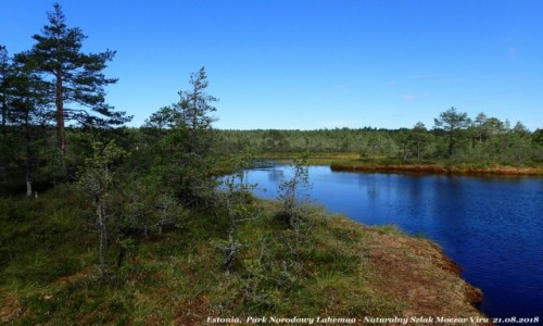 Zdjęcie ESTONIA / - / Viru / Park Narodowy Lahemaa - Naturalny Szlak Moczar Viru