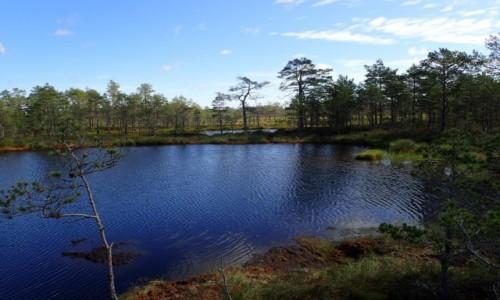 ESTONIA / - / Viru / Park Narodowy Lahemaa - Naturalny Szlak Moczar Viru