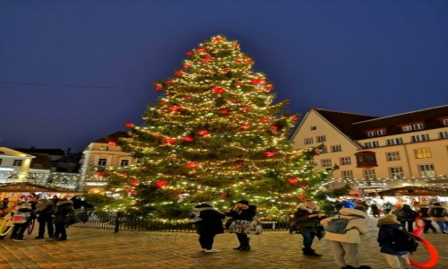 Zdjecie ESTONIA / Harjumaa / Tallin / Święta czas zacząć