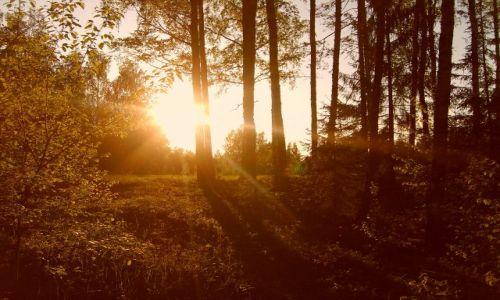 Zdjecie ESTONIA / Południowo-wschodnia Estonia / Vohandu / Zachód słońca nad Vohandu
