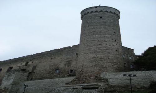 ESTONIA / Tallinn / Tallinn / Długi Hermann