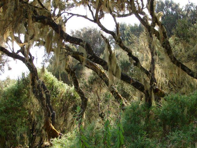 Zdjęcia: Góry Simen, -Etiopia Północna , Góry Simen , ETIOPIA