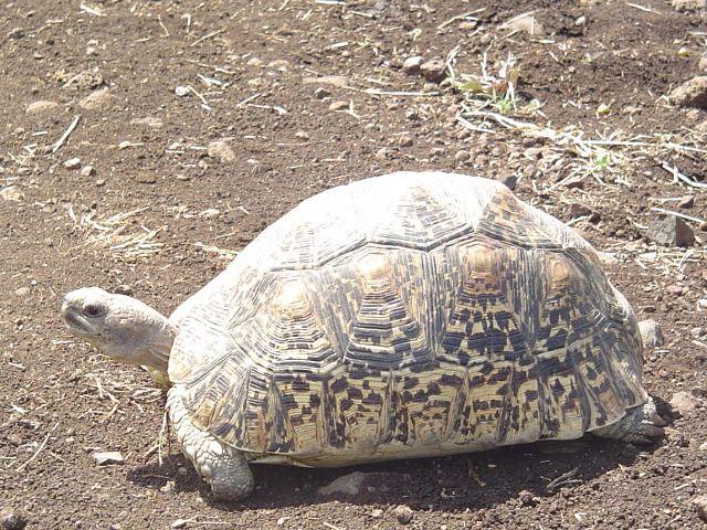 Zdjęcia: Nechisar NP, Nechisar, Zawalidroga, ETIOPIA