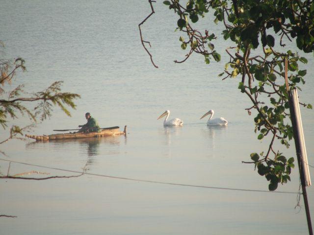 Zdjęcia: Bahir Dar, Poranny połów- jezioro Tana, ETIOPIA
