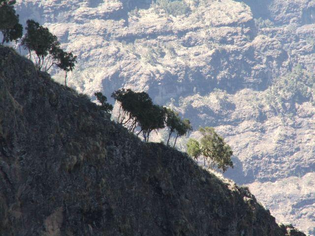 Zdj�cia: Siemen Mountains, G�ry Siemen, W g�rach, ETIOPIA