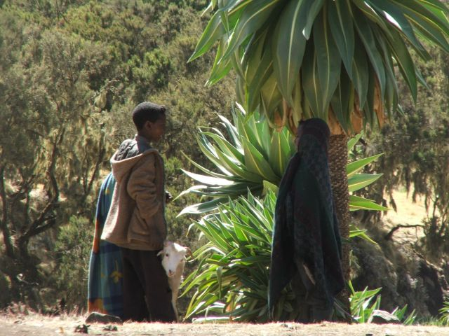 Zdjęcia: Siemen Mountains, Góry Siemen, Mam koze do opchnięcia..., ETIOPIA