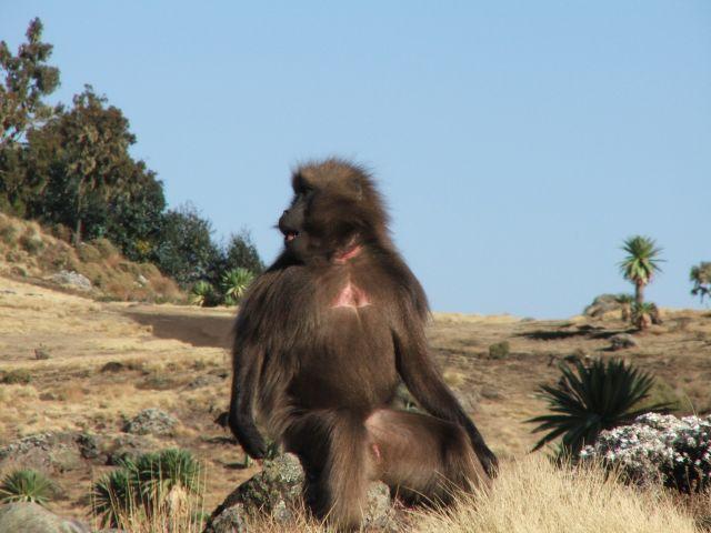 Zdjęcia: Siemen Mountains, Góry Siemen, A tak mam z profila, ETIOPIA
