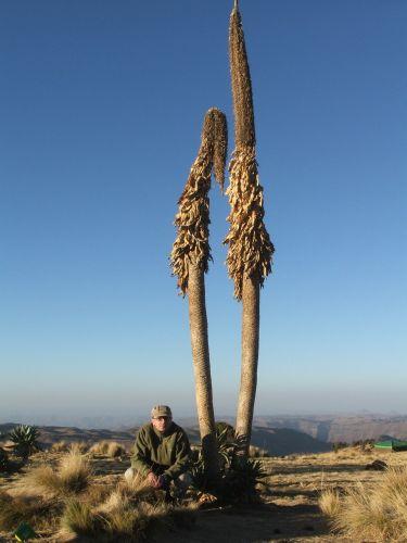 Zdjęcia: Siemen Mountains, Góry Siemen, Autor o świcie.Brrr, ETIOPIA