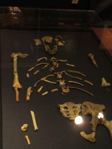 Zdjęcia: Muzeum Narodowe w Addis Ababie, Addis Ababa, Nasza prapraprapra babcia Lucy, ETIOPIA