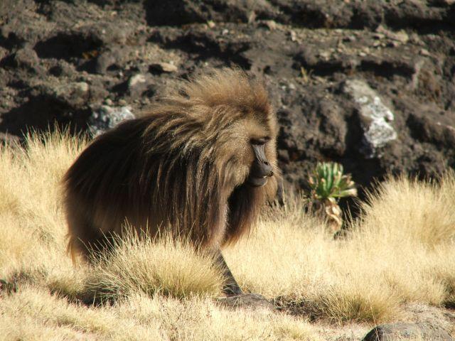 Zdjęcia: góry Siemen, Siemen Mountains, Jeszcze jedno ujęcie, ETIOPIA