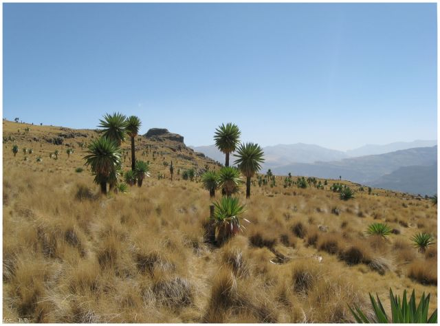 Zdjęcia: jw, Góry Siemen, Siemen Mts National Park, ETIOPIA