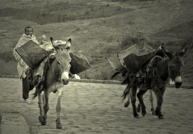 Zdjęcia: po drodze, pólnoc w okolicach gór Simen , biblijne skojarzenia z Etiopii, ETIOPIA
