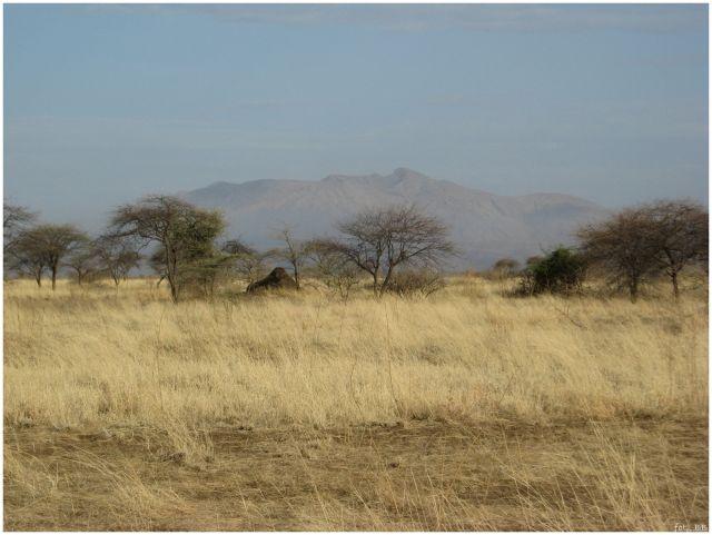 Zdjęcia: okolice Awash, Etiopia centralna, Awash National Park, ETIOPIA