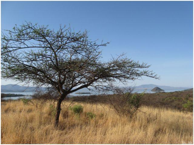 Zdjęcia: Nechisar National Park, Etiopia południowa, Widok na jezioro Chamo, ETIOPIA