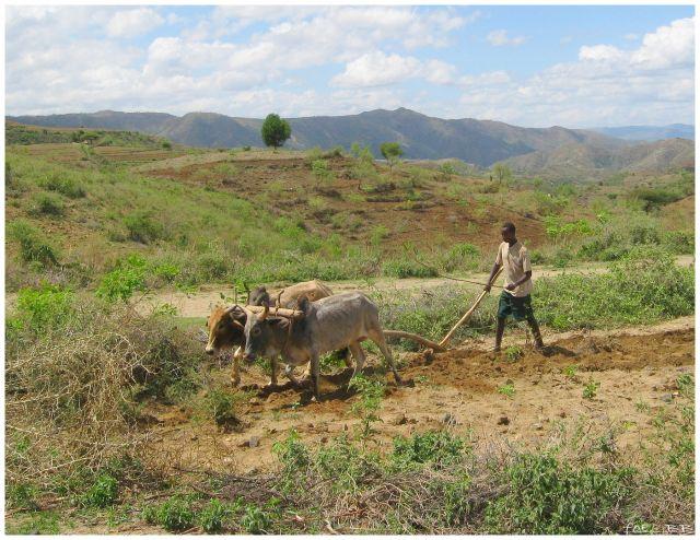 Zdjęcia: w drodze do Jinka, Etiopia południowa, Oracz, ETIOPIA