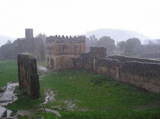 Zdjęcia: etiopia, deszczyk etiopski, ETIOPIA
