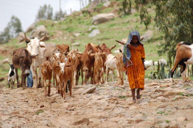 Zdjęcia: etiopia, mała pasterka, ETIOPIA